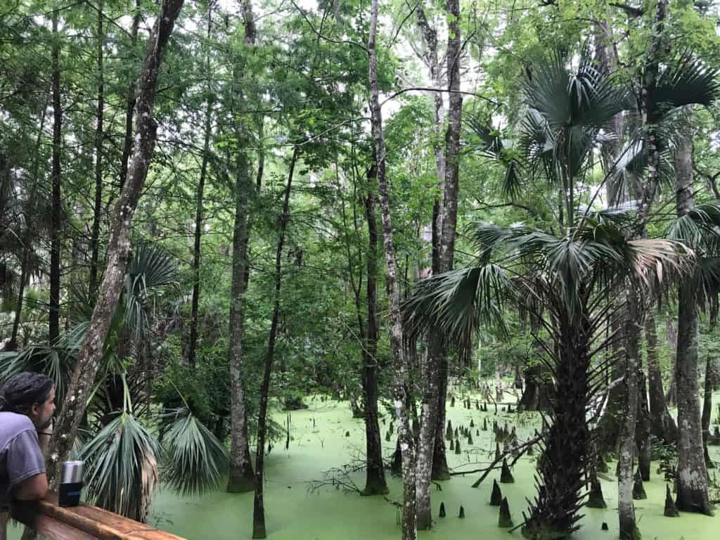 Silver Springs Campground Trail in Florida