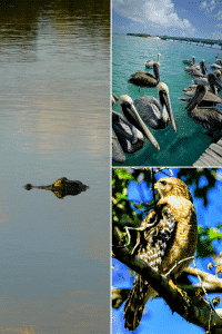 Florida photography locations with alligators and birds