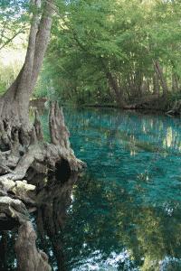 cypress tree and florida photography spots near orlando