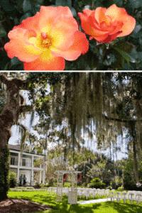 Leu Gardens flower photography